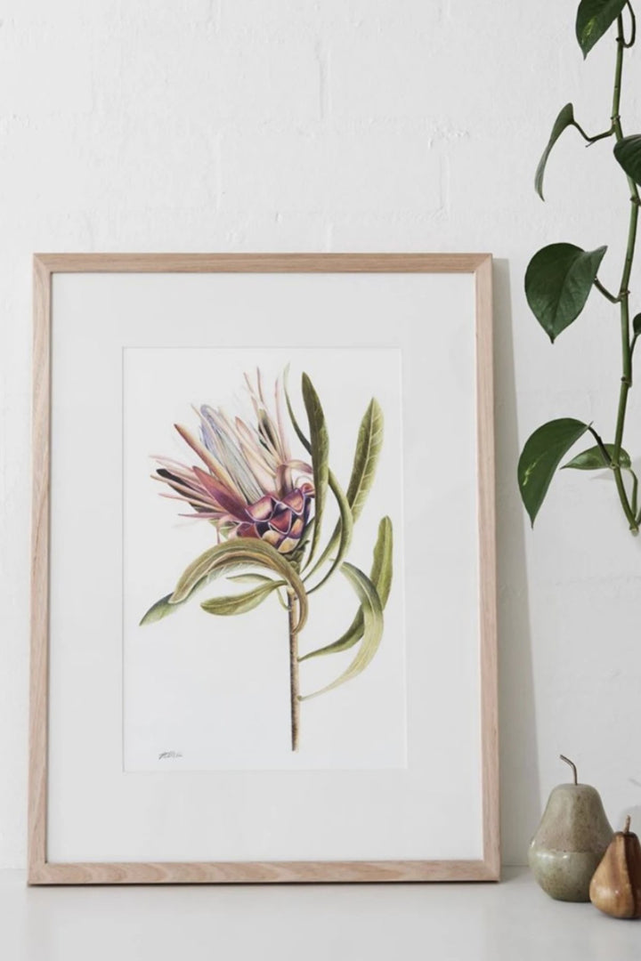 Illustration - Coloured Protea Limited Edition - Shop Online At Mookah - mookah.com.au