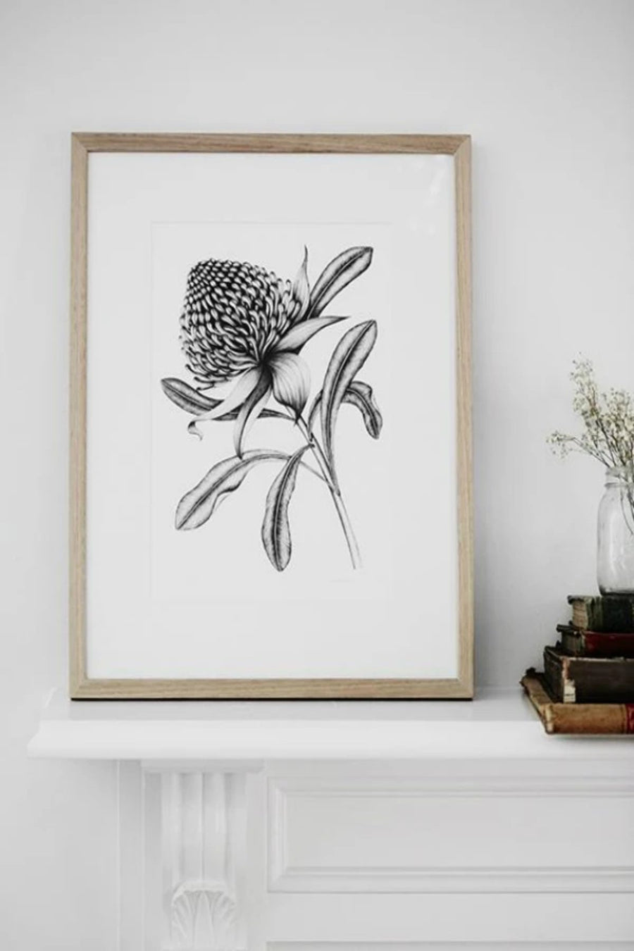 Illustration - Waratah Limited Edition - Shop Online At Mookah - mookah.com.au