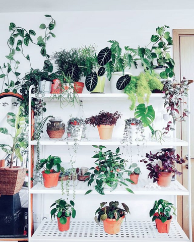 Local plant instagram accounts to follow right now Singapore