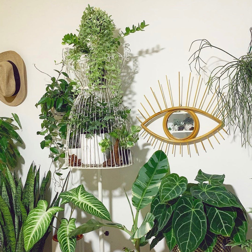 Plants make people happy | Styling your HDB Singapore