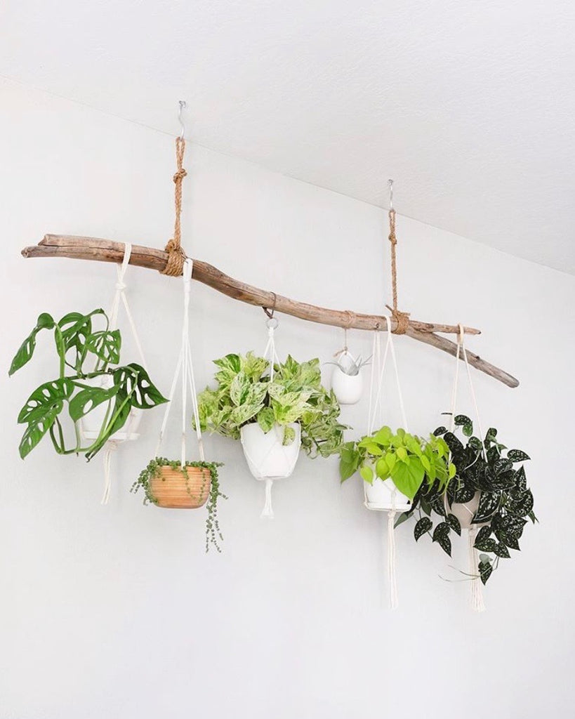 Plants make people happy | beautify your home with plants