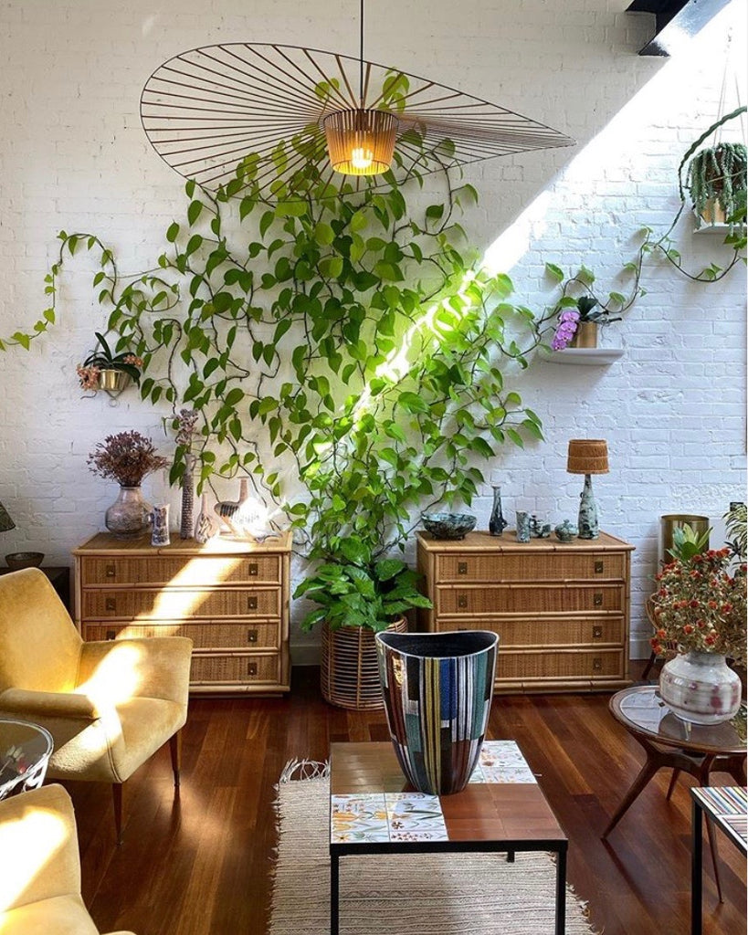 Home and decor Singapore | Adding plants in your home