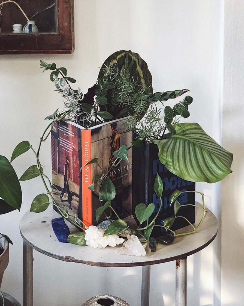Home and decor Singapore | Decorating your home with plants
