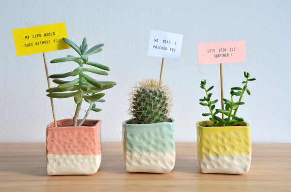 Handmade ceramic indoor planter | Eat & Sip pottery Singapore