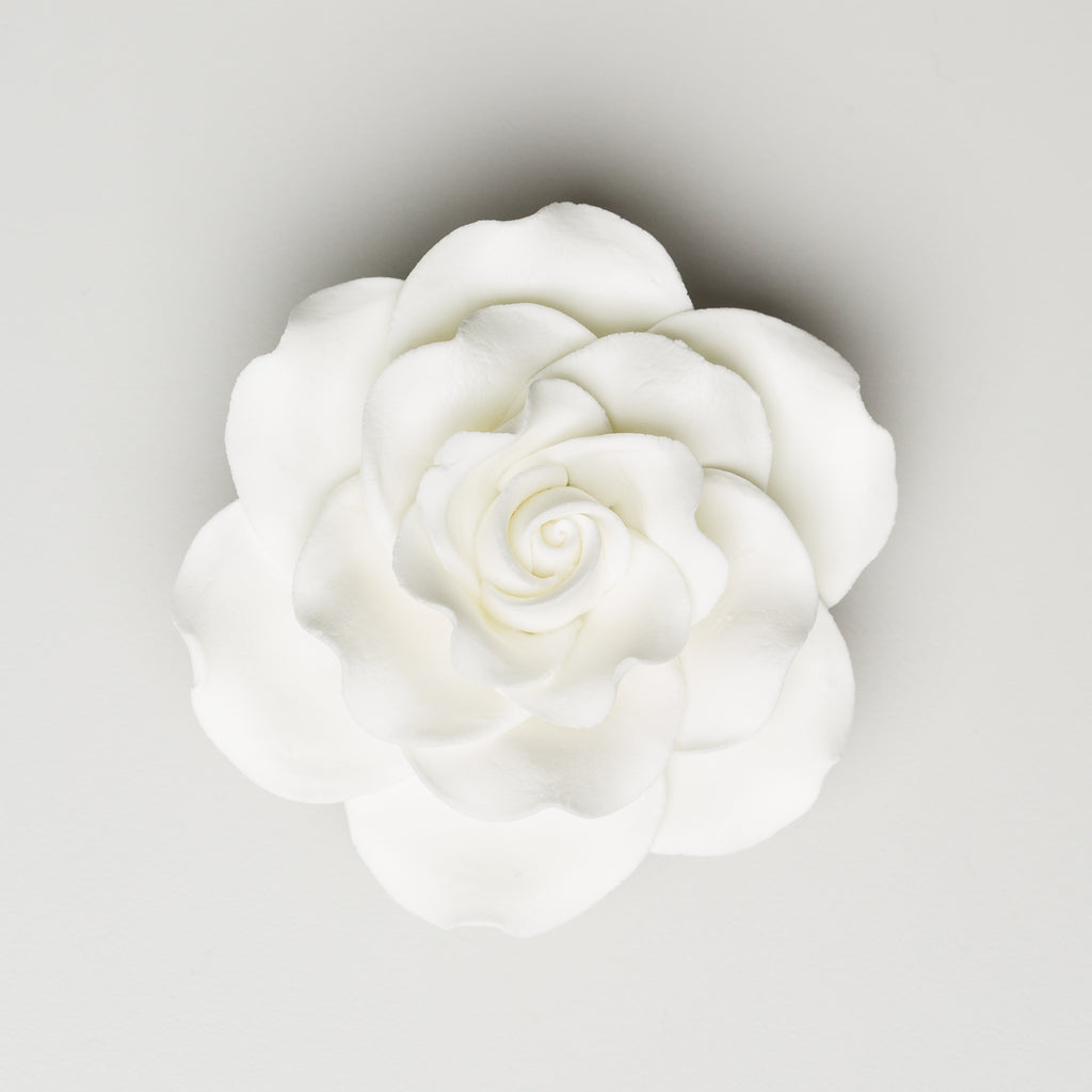 "3.5"" Queen Elizabeth Rose - White (12 per box)"