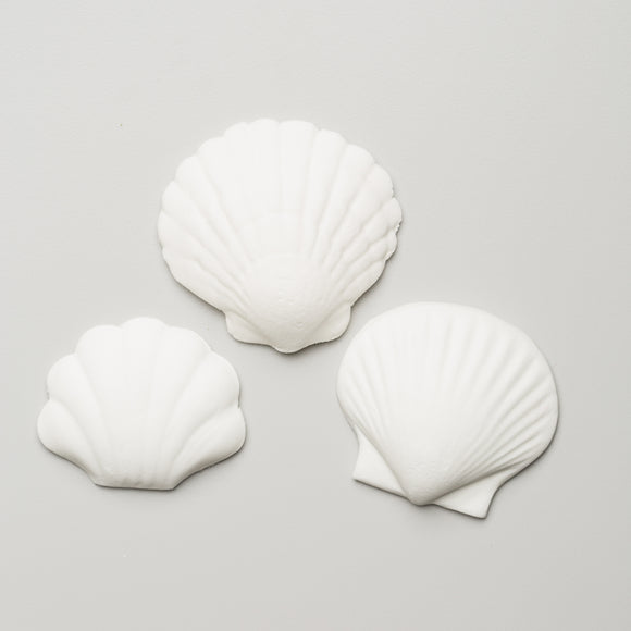 Seashell Assortment 1