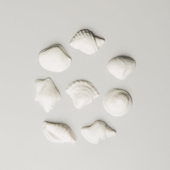 Seashell Assortment 6