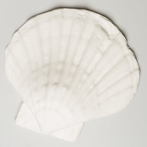 "Tiger Paw Shell 6"" (2 per box)"