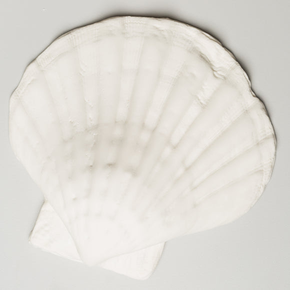Tiger Paw Shell 6