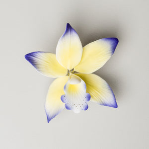 "3"" Brasavoleio Orchid - Purple & Yellow (9 per box)"