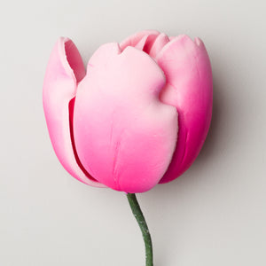 "3"" French Tulip - Pink"