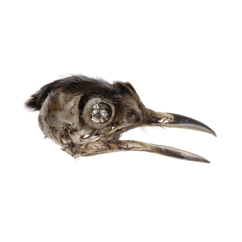 Bird Skull Brooch