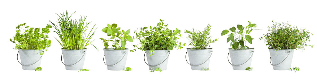 Eco friendly kitchen: various herbs in buckets