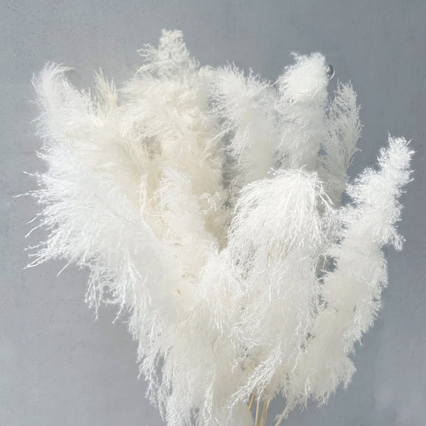 Pampas Grass Stalk (OFF-WHITE)