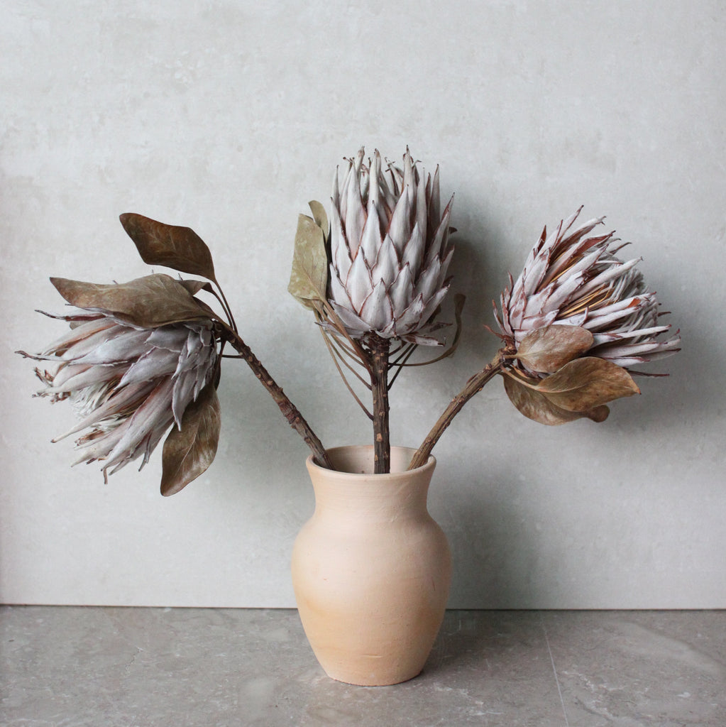 PROTEA PROTEA, I LOVE YOU