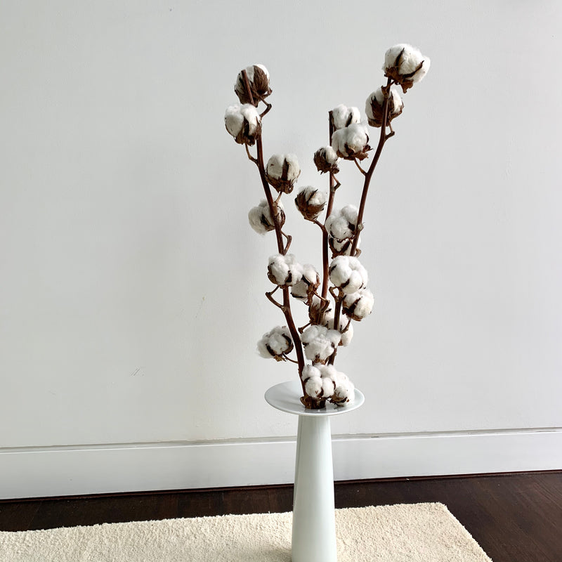 COTTON BUTTS, OOPS BUDS: TALL EDITION (SINGLE STALK)