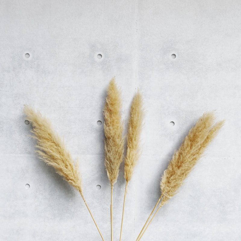 Pampas Grass Stalk (Natural)