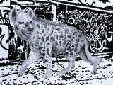Heckling Hyena Coloration Prints