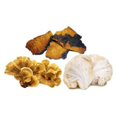 New Cancer Fungotherapy - Supporting Cancer Treatment with Polysaccharide rich Chaga, Lions Mane and Turkey Tail Medicinal Mushroom Immunotherapy