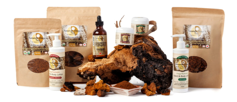 Chaga mushrooms, how to use chaga, too much chaga, benefits of chaga mushroom, medicinal mushrooms,  how to use mushrooms for healing,
