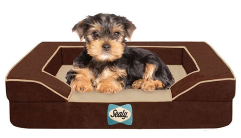Sealy Dog Beds