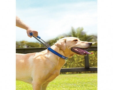 Quick Control Collar + Built-in Leash - Medium