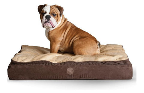 Feather Top Orthopedic Dog Bed