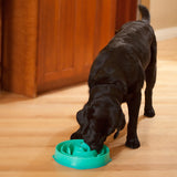 Fun Feeder Slow Feeder Dog Bowl