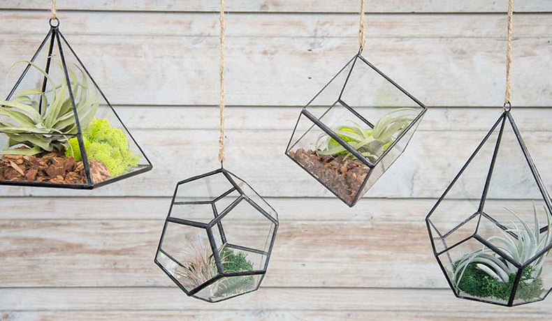 4 Geometric Terrarium Styles We Love