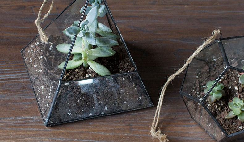 3 of the Best Succulents for Hanging Terrariums