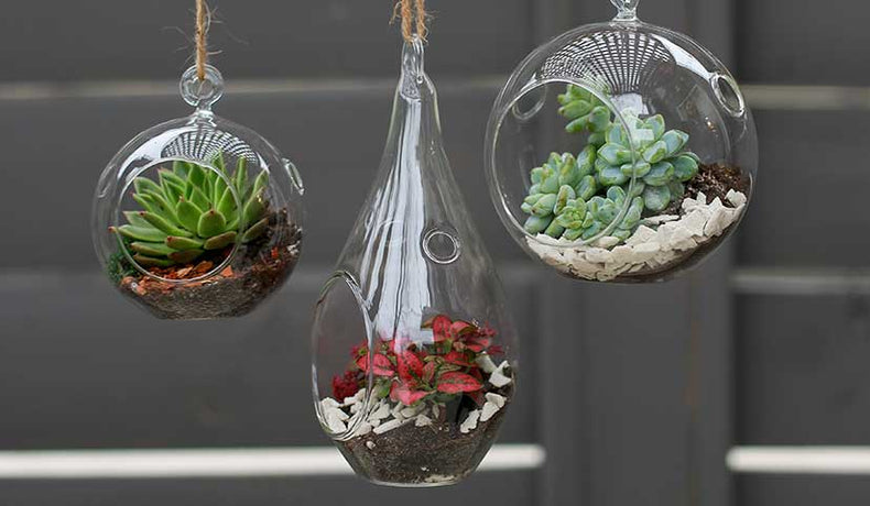 DIY Hanging Terrariums