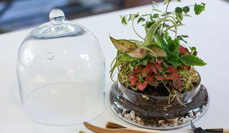 How to Create a Closed Terrarium