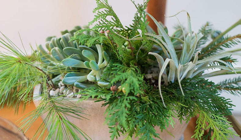 10 Inspiring Winter Indoor Planters