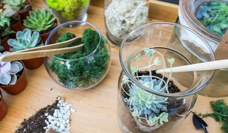 Repotting Succulents 101
