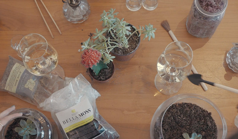 How to Host a Terrarium Party