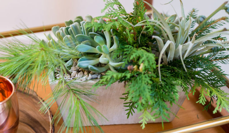 Succulent Care for the Winter Months