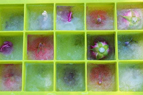flowers frozen in ice after third and final round of freezing