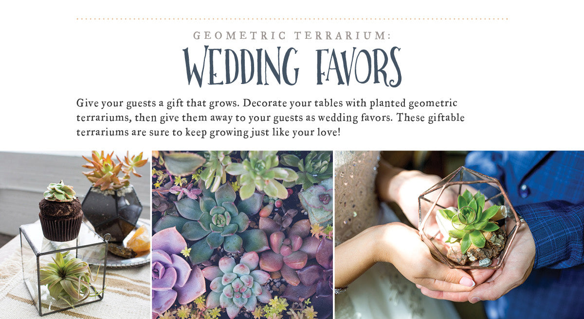 Geometric Terrarium: Wedding Favors