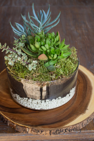Repotting Succulents: Modern Cylinder