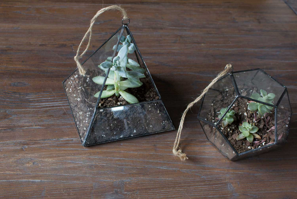 3 Of The Best Succulents For Hanging Terrariums 46 Spruce Wholesale Supply House
