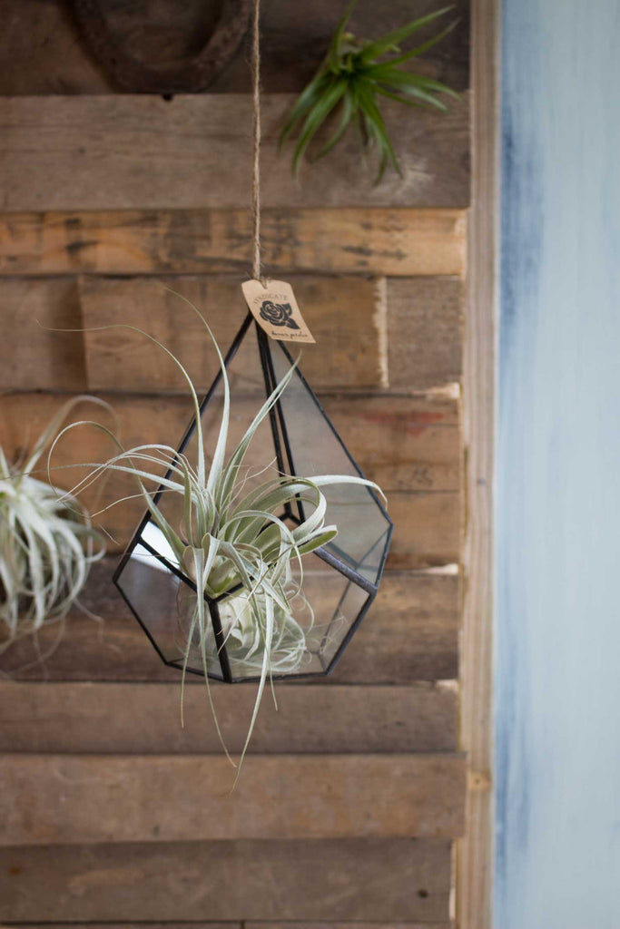 3 Ideal Spots For A Hanging Terrarium 46 Spruce Wholesale Supply House