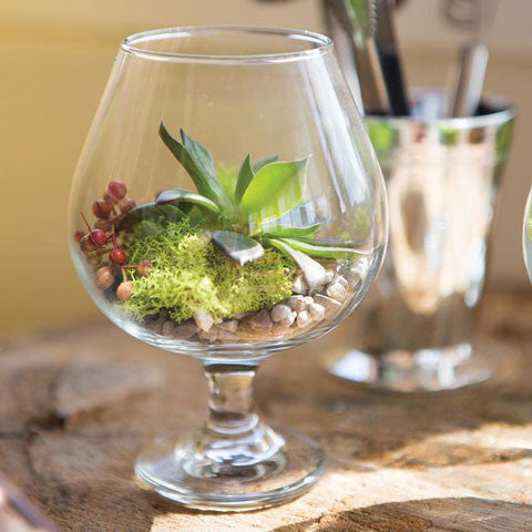 Brandy Vase used as a Terrarium