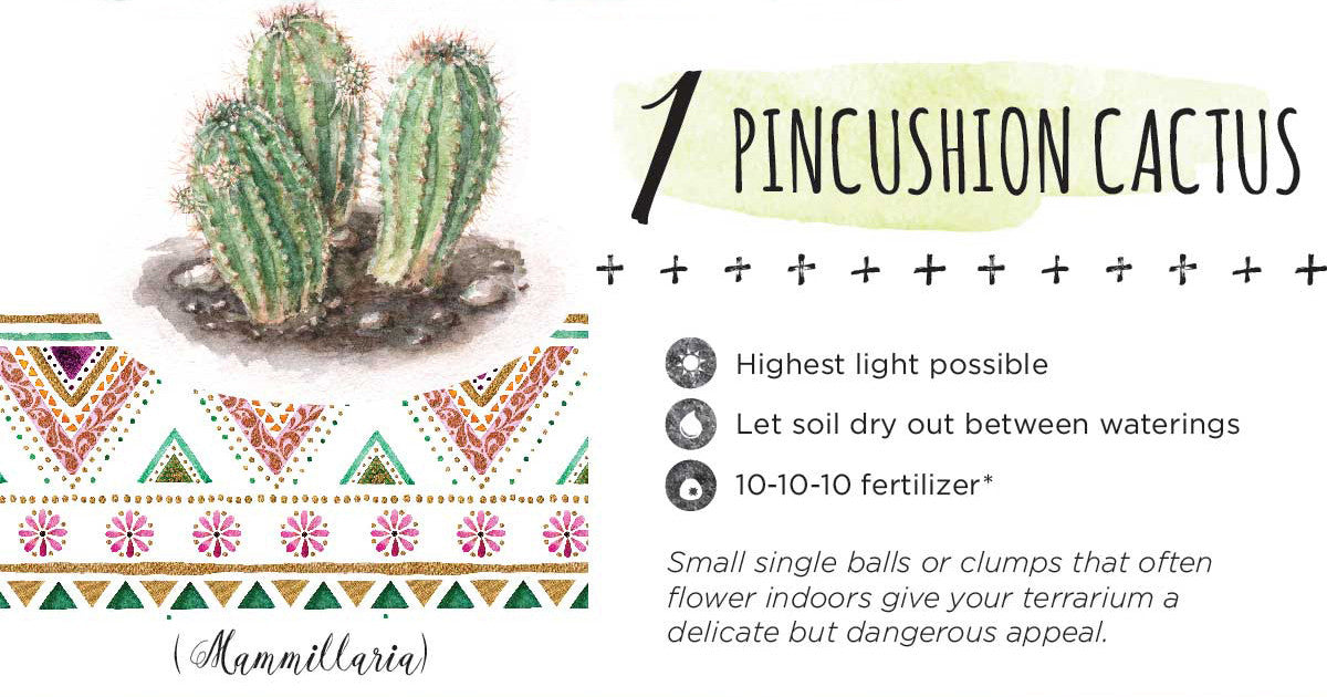 9 Best Succulents For Your Terrarium 46 Spruce Wholesale Supply House