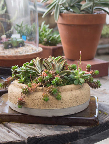 Featured Springtime Succulent Care Tips