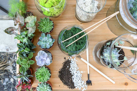 Spring Time Succulent Care: Repotting succulents
