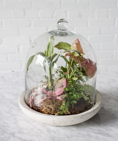 Boho Inspired Closed Terrarium Ideas 46 Spruce Home And Garden