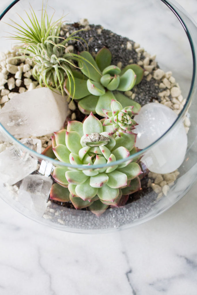 beachy diy terrarium