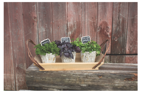 herbs in weather oak planters