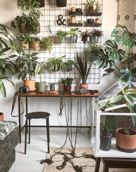 urban jungle terrarium instagram