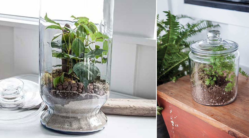 6 Terrarium Containers Perfect For Closed Terrariums 46 Spruce